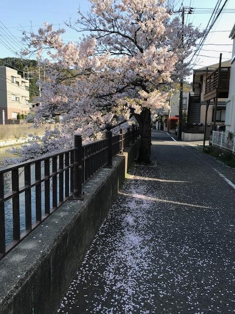 桜吹雪.jpeg
