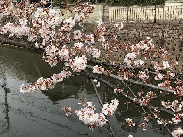 桜3.jpeg