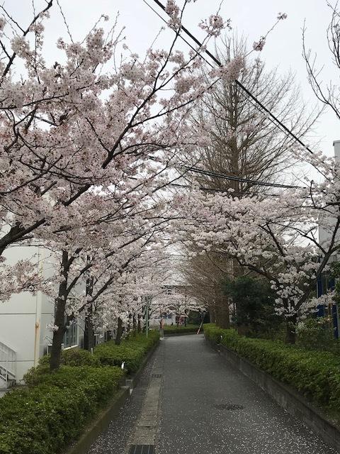 桜6.jpeg
