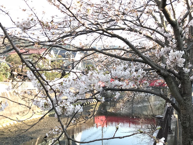 桜7.jpeg