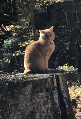 猫。.jpg