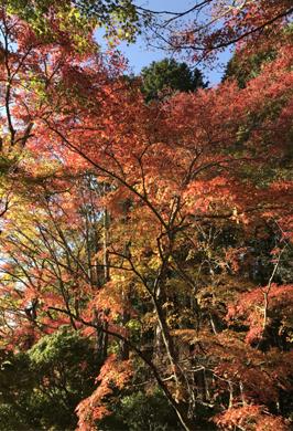 紅葉。.jpg