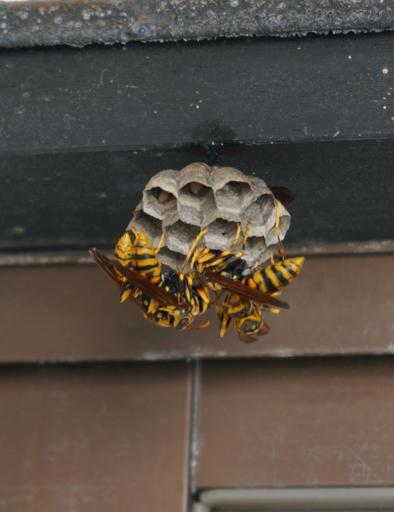 蜂の巣 1.jpg