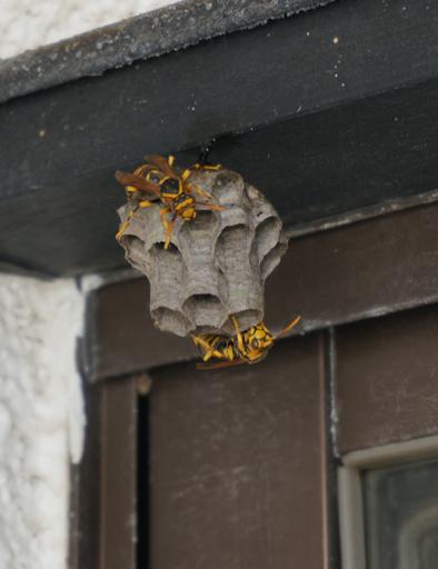 蜂の巣 2.jpg