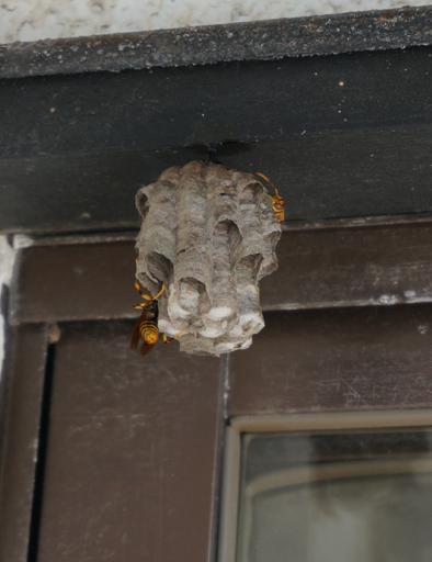 蜂の巣 3.jpg