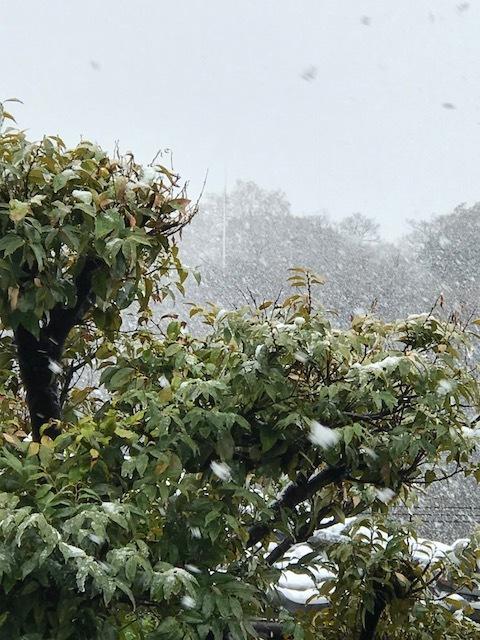 雪 1.jpeg