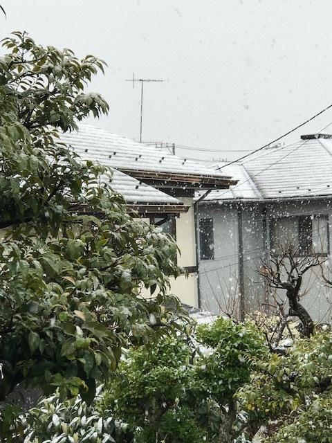 雪 3.jpeg